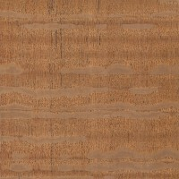 Silky Oak (sealed)
