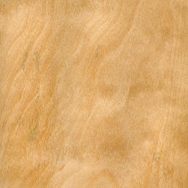 Silver Birch The Wood Database Lumber Identification