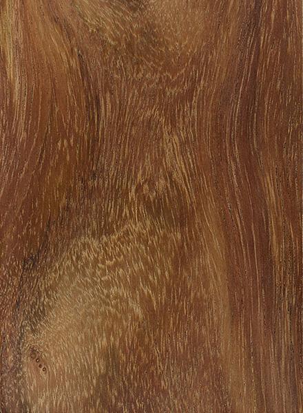Sissoo | The Wood Database - Lumber Identification (Hardwood)