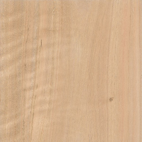 Spotted Gum The Wood Database Lumber Identification