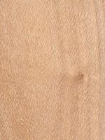Southern Silky Oak (Grevillea robusta)