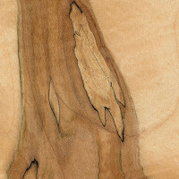 Spalted Maple (sealed)