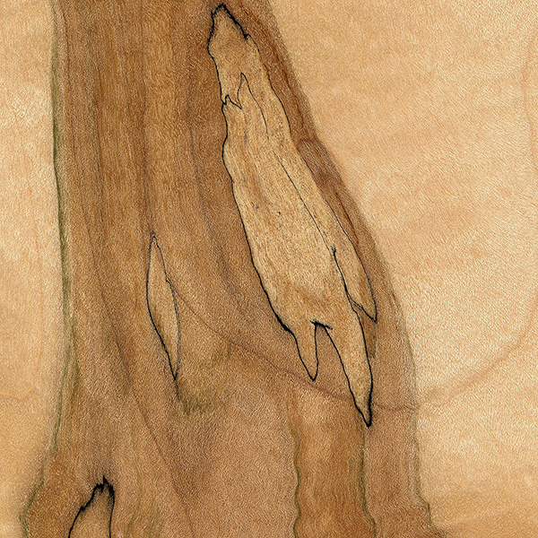 Spalted Maple The Wood Database Lumber Identification Hardwood