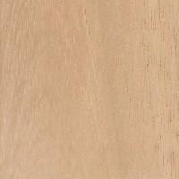 Spanish Cedar (Cedrela odorata)
