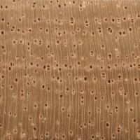 Spanish Cedar (endgrain 10x)