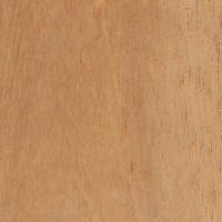 Spanish Cedar (sealed)