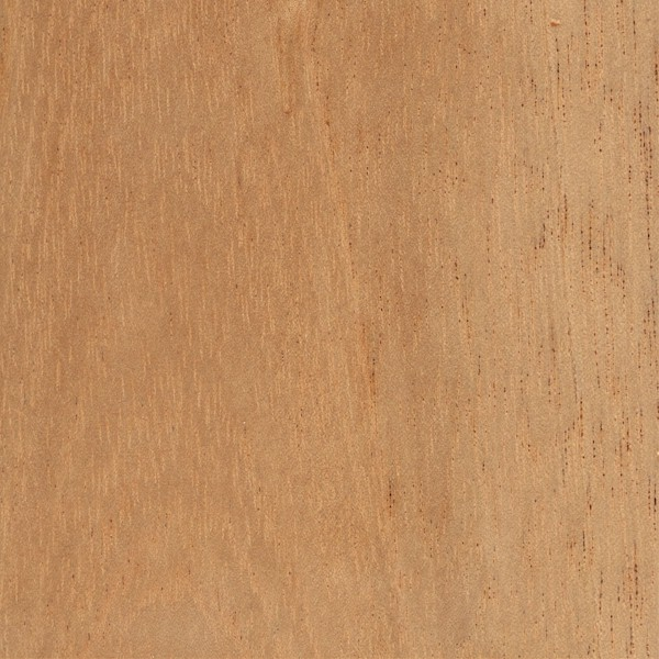 Sensational Spanish Cedar The Wood Database Lumber Identification Download Free Architecture Designs Embacsunscenecom