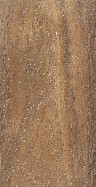 Albizia (Albizia ferruginea)