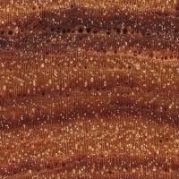 Tulipwood (endgrain 10x)