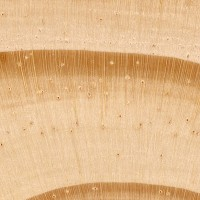 Virginia Pine (endgrain 10x)