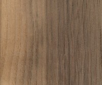 Black Walnut (sapwood demarcation)
