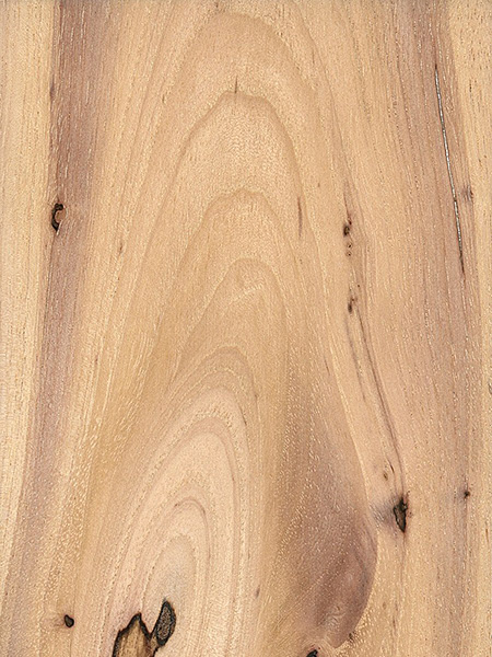Water Hickory (Carya aquatica)