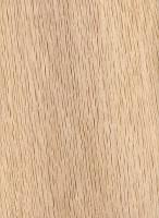 Water Oak (Quercus nigra)