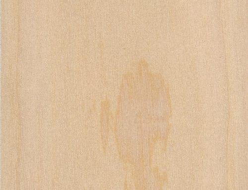 Western White Pine