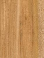 Winged Elm (sealed)