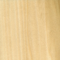 Yellow Poplar (sealed)